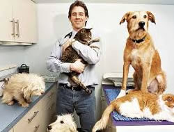 Veterinarian in Torrance